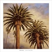 Fog Over Canary Palms Fine Art Print