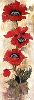 "Strand of Poppies II by Liz Jardine - 12"" x 36"""