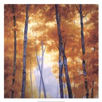 Blue Wood Canopy Fine Art Print