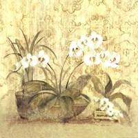 Espirit Orchid Fine Art Print