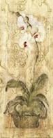 Esprit Phalaenopsis Panel Fine Art Print