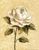 Elegant Rose Framed Print