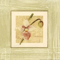 "Exotic Floral IV by Cheri Blum - 12"" x 12"""