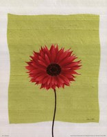 Pretty Daisy Framed Print