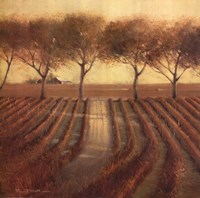 "Vintage Sunlit Vineyard by Paul Mathenia - 24"" x 24"""