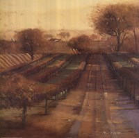 Vineyard Vista Fine Art Print