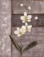 Orchid Shimmer I Fine Art Print