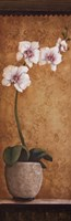 "Hanna's Orchids I by Susan Osborne - 12"" x 36"""