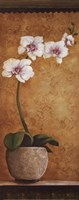 Hanna's Orchids I - mini Framed Print