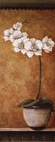 Hanna's Orchids II - petite Fine Art Print