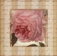 Rose & Romance II Fine Art Print