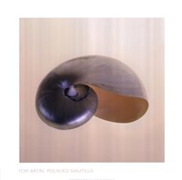 "Polished Nautilus by Tom Artin - 20"" x 20"""