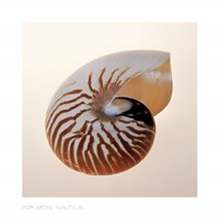"Nautilus by Tom Artin - 20"" x 20"""