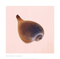 Fig Shell Fine Art Print