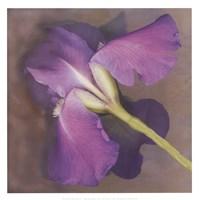 Parfum Framed Print