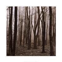 "Gathering by Erin Clark - 20"" x 20"" - $18.99"