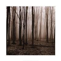 "Winter Woods by Erin Clark - 20"" x 20"""