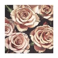 """Roses by Elizabeth Hellman - 24"""" x 24"""""""