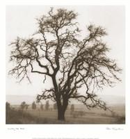 "13"" x 14"" Oak Trees"