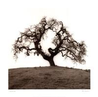 Hillside Oak Tree Framed Print