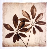 Cassava Leaves Fine Art Print