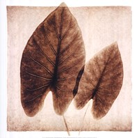 Taro Leaves Fine Art Print