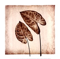 Tropical Caladiums Fine Art Print