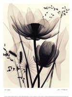 Lotus and Grasses Fine Art Print