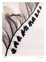 Solomons Seal Framed Print