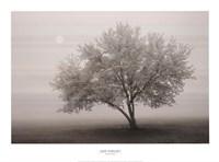 """Forever Spring by Igor Svibilsky - 30"""" x 22"""""""