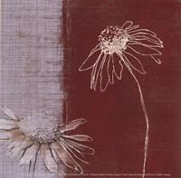 Daisy Sketch II Fine Art Print