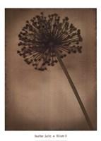 """Allium II by Heather Jacks - 20"""" x 28"""" - $25.99"""