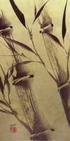 Bamboo's Peace Fine Art Print