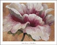 Pink Begonia Fine Art Print