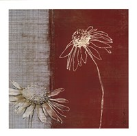 "Daisy Sketch II by Tandi Venter - 28"" x 28"""