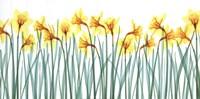 Floral Delight I Fine Art Print
