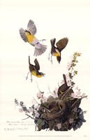 Yellow-Breasted Chat Fine Art Print