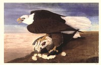 Bald Eagle W Goose Fine Art Print