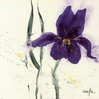 Iris II Fine Art Print
