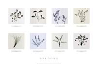 8 Herbs Fine Art Print
