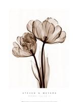 Parrot Tulips II (Sm) Fine Art Print