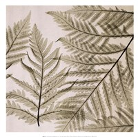 "Ferns I by Steven N. Meyers - 13"" x 13"" - $11.99"
