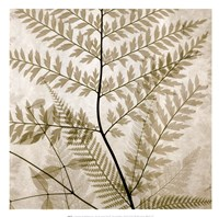 Ferns II Fine Art Print
