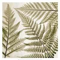"Ferns III by Steven N. Meyers - 13"" x 13"" - $11.99"