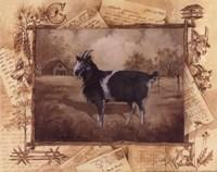 Goat Fine Art Print