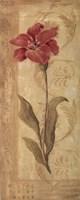 Evening Lily Framed Print