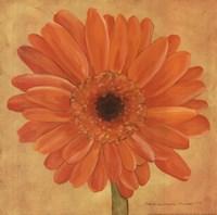 Orange Gerber Fine Art Print