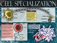 Cell Specialization Fine Art Print