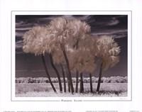 "Paradise Island by Mike Jones - 10"" x 8"""