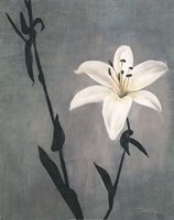 Lily on Grey Fine Art Print